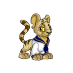 Kougra Sailor Top