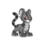 grey kougra