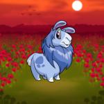 Red Poppy Field Background