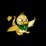 island pteri