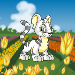 Colourful Flower Farm Background