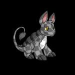 checkered bori