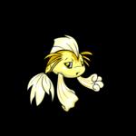 yellow koi
