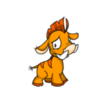 orange moehog