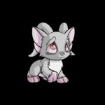 grey acara
