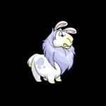 white gnorbu