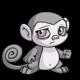 Grey Mynci