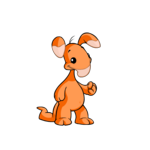 orange blumaroo