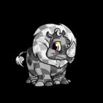 checkered tonu