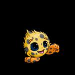 spotted jubjub