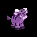 purple kau
