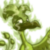 Sick Male Swamp Gas Lenny