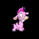 pink moehog