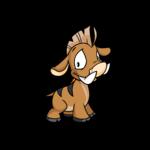 brown moehog