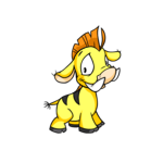 yellow moehog