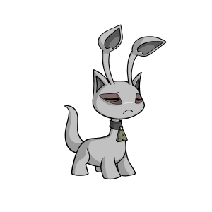 Male Grey Aisha