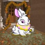 Premium Collectible: Autumn Cottage Background