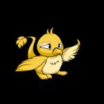 yellow pteri