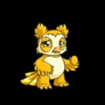 yellow vandagyre