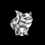 checkered wocky