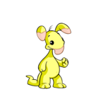 yellow blumaroo