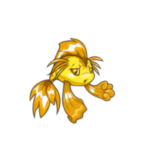 gold koi