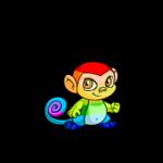 rainbow mynci