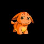 orange poogle
