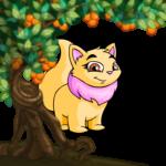 Tangerine Side Tree