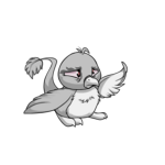 grey pteri