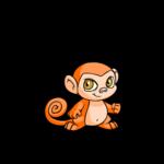 orange mynci