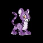 purple kougra