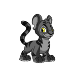 shadow kougra