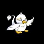 white pteri