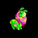 disco gnorbu