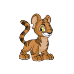 brown kougra
