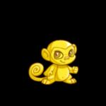 gold mynci