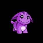 purple poogle