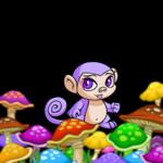 Colourful Mushroom Foreground