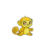 yellow mynci