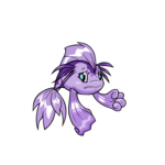 purple koi